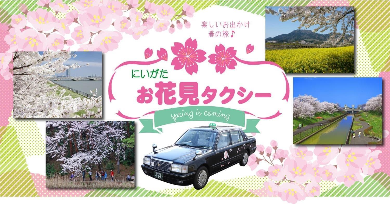 お花見タクシーはいかがですか?